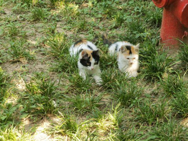 青龙寺的小奶猫