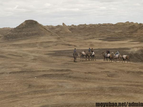 南八仙骑骆驼